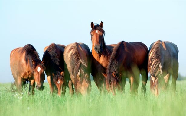Фотообои кони в поле (animals-0000032)
