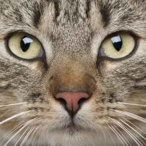 Фотообои кот или кошка (animals-0000168)