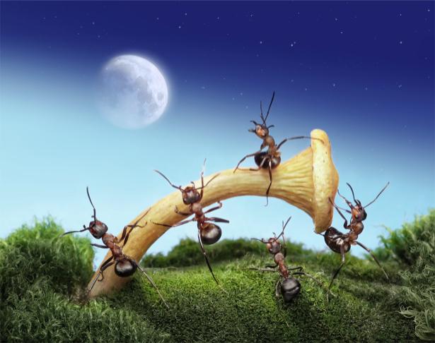Фотообои муравьи мы сделаем это (animals-0000321)
