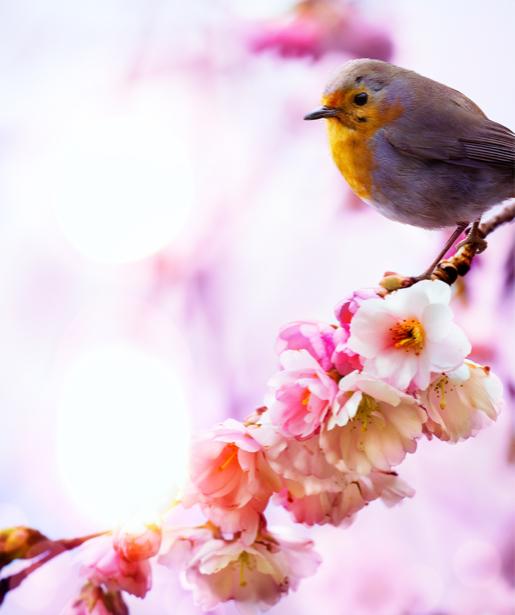 Фотообои Птичка в цветах (animals-0000409)