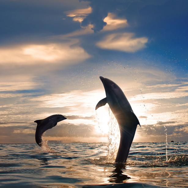 Фотообои Счастье дельфина (animals-516)