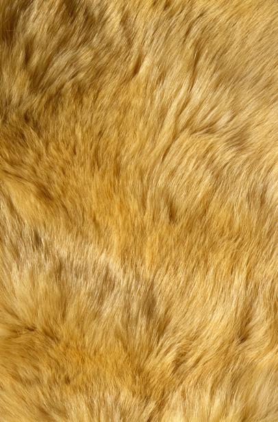Фотообои песочная текстура мех (background-0000306)