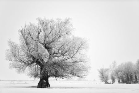 Фотошторы зима дерево (bedroom-curtain-00005)