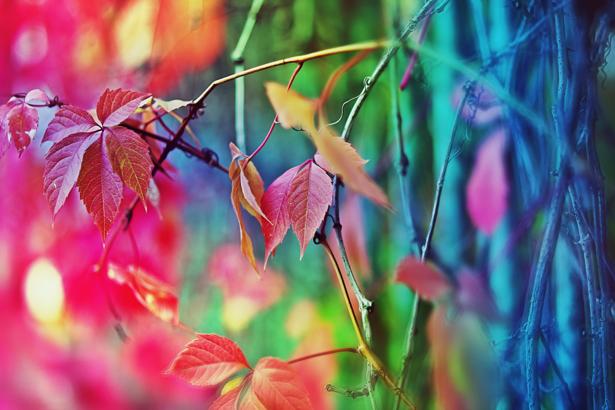 Фотообои ветки дерева (flowers-0000168)