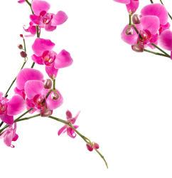 flowers-0000293