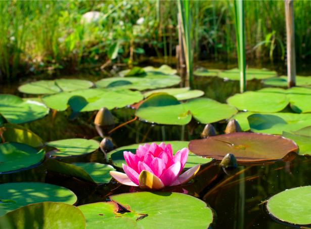 Фотообои на стену цветок лилия (flowers-0000311)