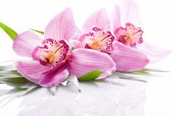 flowers-0000525