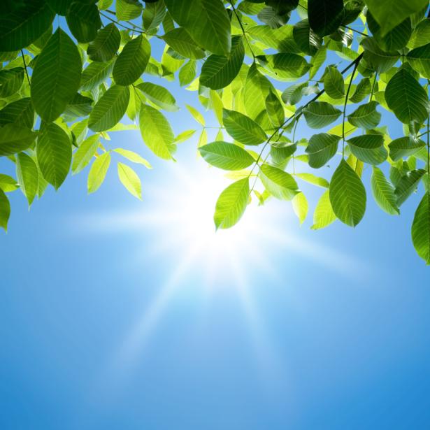 Фотообои весенняя листва (nature-0000807)