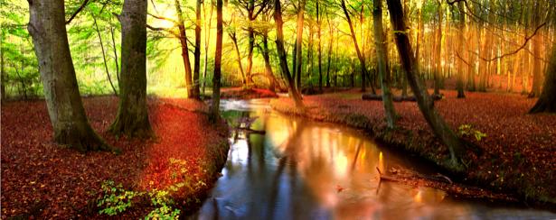 Фотообои с природой солнечный лес панорама (nature-00119)