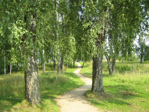 Фотообои фото дорога лес (nature-00253)