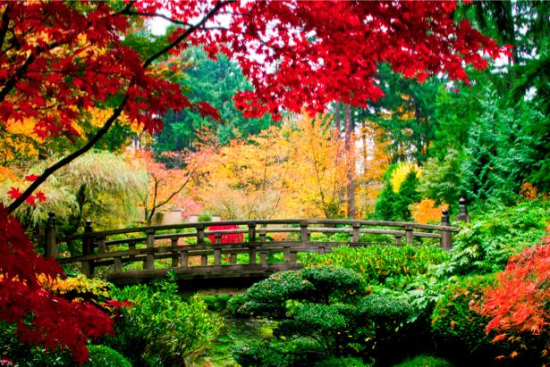 Фотообои красная листва мост лес (nature-00407)
