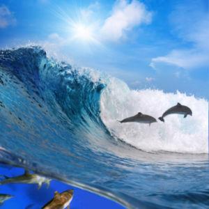 Фотообои фото море волны дельфины (sea-0000062)
