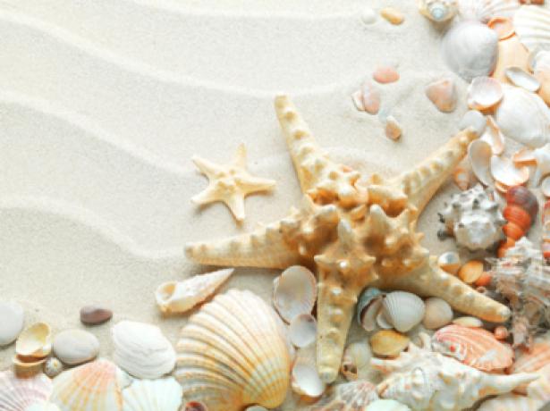Фотообои ракушки на белом песке (sea-0000110)