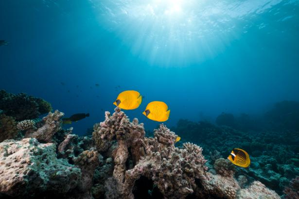 Фотообои кораллы желтые рыбки риф (underwater-world-00044)