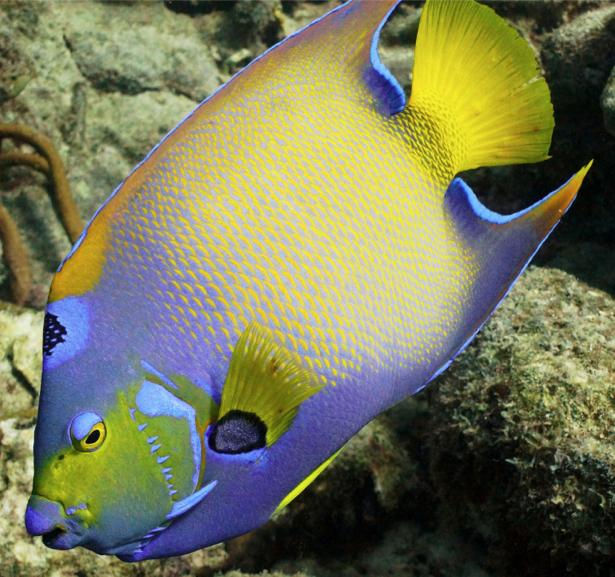 Фотообои для ванны желтая рыба (underwater-world-00139)