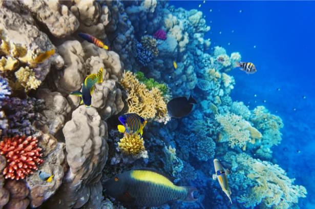 Фотообои ванной комнате кораллы (underwater-world-00144)