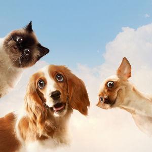 Фотообои Заглядывающие друзья (animals-584)