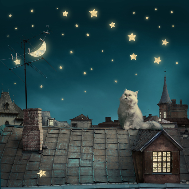 Фотообои кот на крыше (fantasy-0000127)