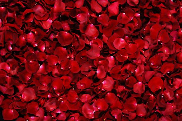 Обои фото Лепестки красных роз (flowers-0000126)