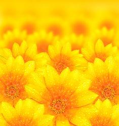 flowers-0000226
