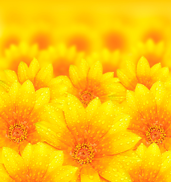 Подсолнухи фотообои цветов на стену (flowers-0000226)