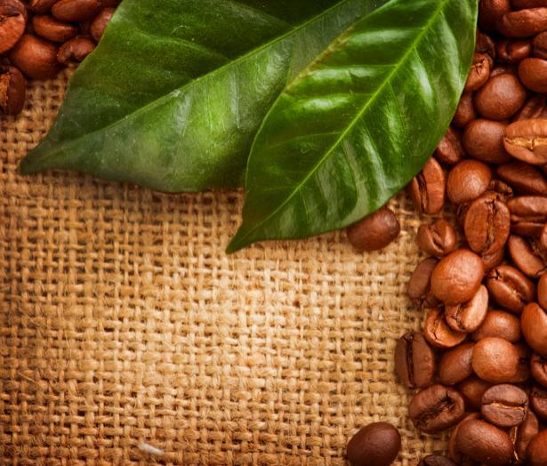 Фотообои для кухни листья кофе (food-0000148)