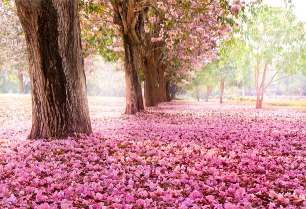 Фотообои цветущий парк (nature-0000691)