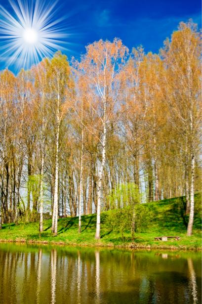 Фотообои с природой река березы (nature-00136)