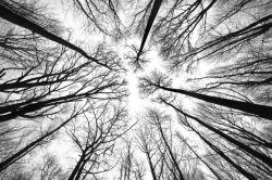 nature-00533