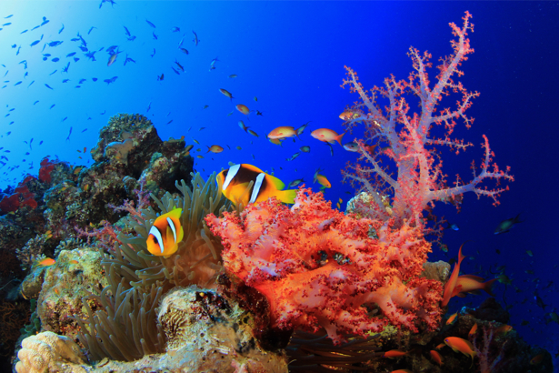 Кораллы, рыбки фотообои в ванную (underwater-world-00166)