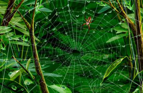 Фотообои сказочный лес и паук (fantasy-0000008)