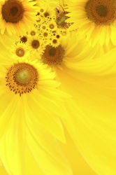flowers-0000187