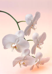 flowers-0000266