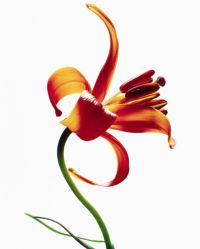 flowers-0000360