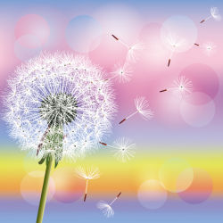 flowers-0000606