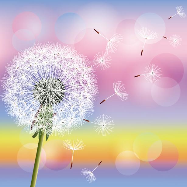 Обои для стен - Одуванчик (flowers-0000606)