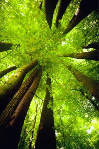 Фотообои весенний лес (nature-0000804)