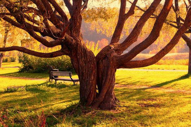 Фотообои виды природы дерево в парке (nature-00074)