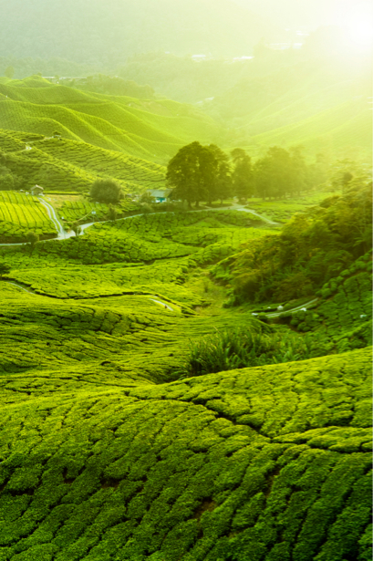 Фотообои зеленое поле холм (nature-00435)