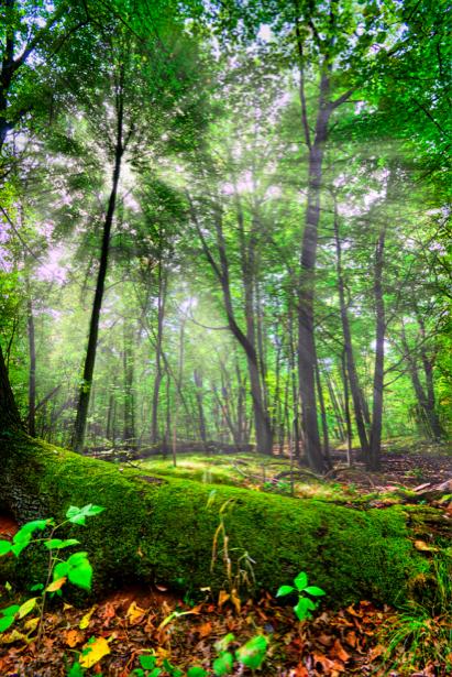 Фотообои лес лучи света (nature-00443)