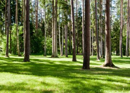 Фотообои лес зеленая трава (nature-00527)