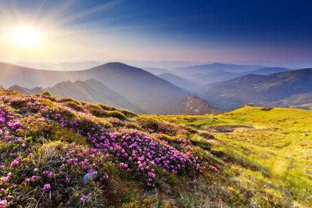 Фотообои Рододендроны на вершине горы (nature-886)