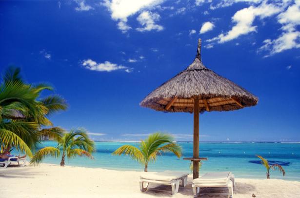 Фотообои пальмы зонтик (sea-0000196)