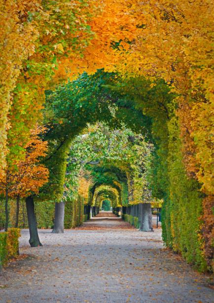 Фотообои дорога в осеннем парке (sp2)