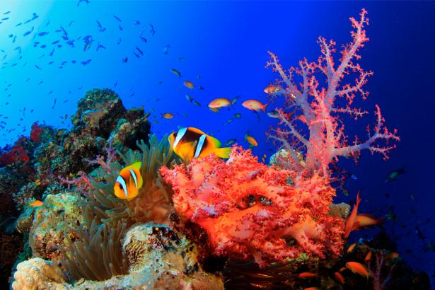 Фотообои ванная красные кораллы (underwater-world-00022)