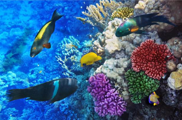 Фотообои для ванны кораллы и рыбки (underwater-world-00158)