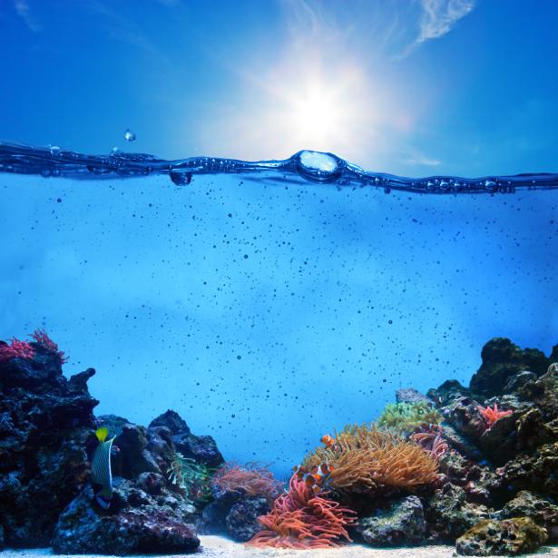 Фотообои для ванны кораллы в воде (underwater-world-00172)
