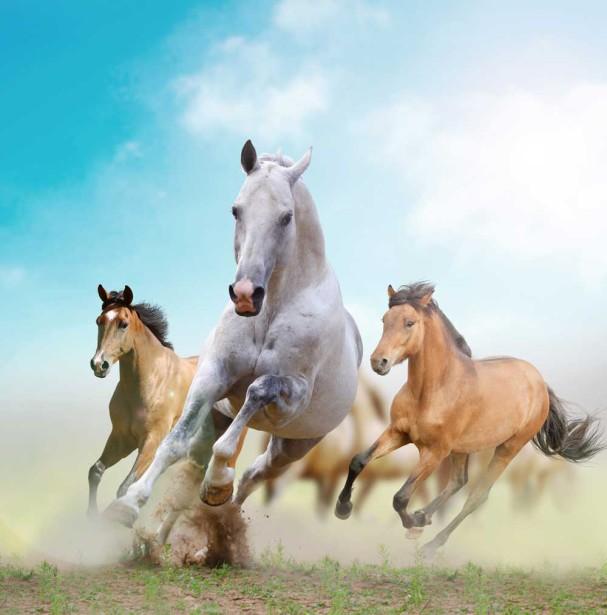 Фотообои с лошадьми (animal288)