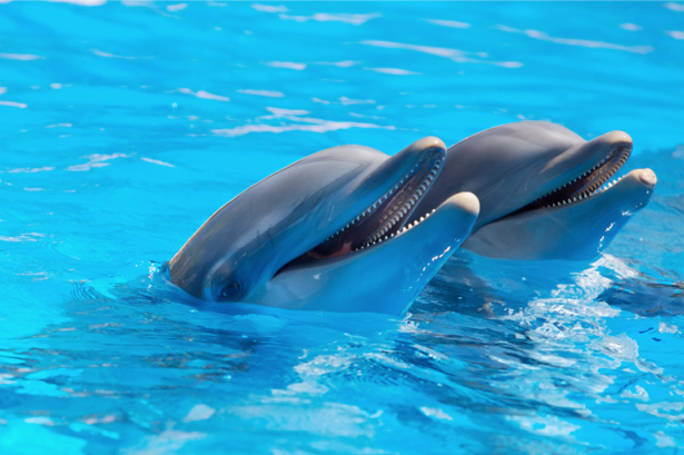 Фотообои дельфины разговор (animals-0000153)