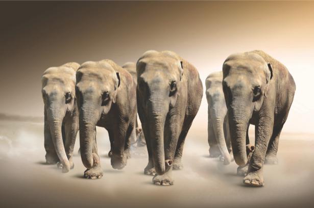 Фотообои слоны в песках (animals-0000296)